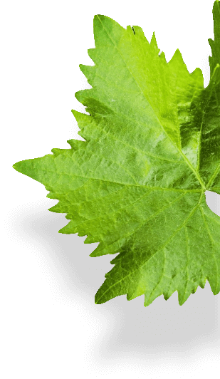 floating leaf focused
